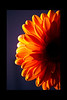 Here Comes the Sun<br /> <br /> 013012_005296 ICC adobe 16in x 24in pic 20in x 30in matte