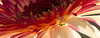Flower pictured :: Gerbera Daisy<br /> <br /> Flower provided by :: Babylon Floral<br /> <br /> 012316_015881 ICC sRGB 9x24