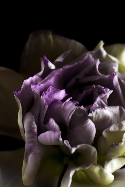 Flower pictured :: Lisianthus<br /> <br /> 033112_004706 ICC sRGB 16in x 24in pic