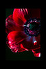 untitled<br /> <br /> Anenome<br /> <br /> 013012_005356 ICC adobe 12in x 18in pic 16in x 24in matte