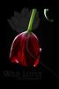 Whispers<br /> <br /> Tulip<br /> <br /> 021012_006310 ICC adobe 16in x 24in pic 20in x 30in matte
