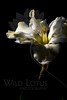 Flower pictured :: Butterfly Daffodil<br /> <br /> 031512_003496 ICC adobe 16in x 24in pic