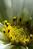 Flower pictured :: Cosmo<br /> <br /> Flower provided by :: Tagawa Gardens<br /> <br /> 081213_000408 ICC sRGB 16x24 pic