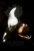 Flower pictured :: Moth Orchid<br /> <br /> Flower provided by :: Whole Foods<br /> <br /> 100712_003146 ICC sRGB 16in x 24in pic