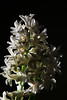 Flower pictured :: Hyacinth<br /> <br /> 033012_004511 ICC sRGB 16in x 24in pic