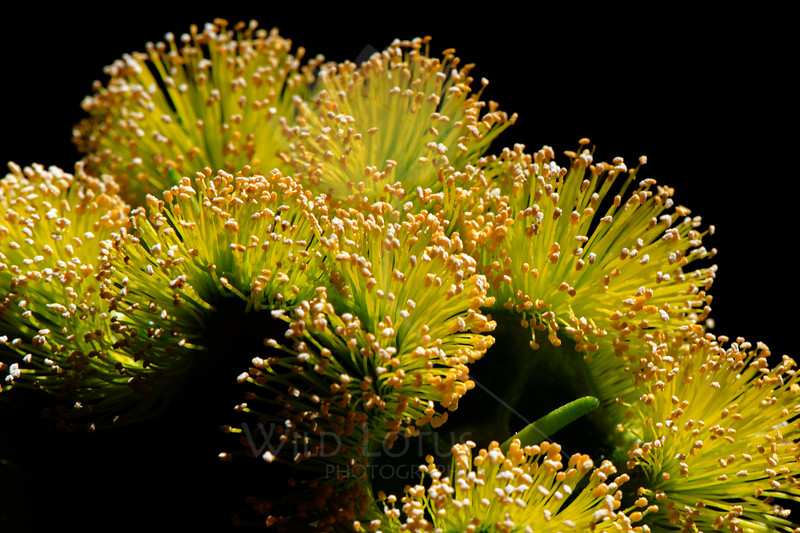 Flower pictured :: Eucalyptus<br /> <br /> Flower provided by :: Babylon Floral<br /> <br /> 100712_003075 ICC sRGB 16in x 24in pic