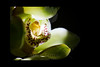 Luminescence<br /> <br /> Orchid<br /> <br /> 012112_004224 ICC adobe 16in x 24in pic 20in x 30in matte