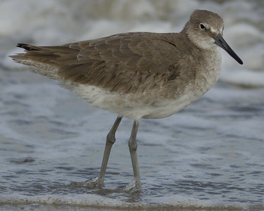 Galveston Island Birding - 2013-11-19
