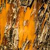 Bark Detail, Tonto Natural Bridge State Park, Arizona, USA