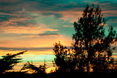 Pine Silhouette On Sunset Clouds