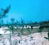 On Patrol Near Quang Ngai With 11th Cav.