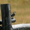Unknown bird??