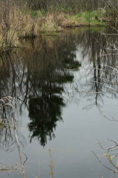 Finzel Swamp - 04/30/2011
