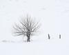 Week 2 - Lone Tree