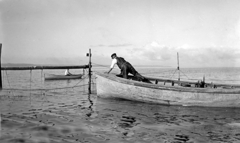 #73 Rear boat - Stowell in the boat 'Rowland' Fish Nets at Roaring Brook (one man in boat) 1917
