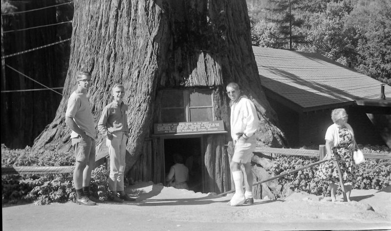 #29 Malcolm-Kenyon-Winston Stebbins Redwood Forest Calif 12 July'62