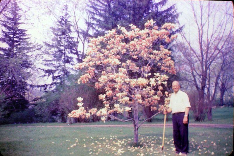 #117 Rowland Stebbins 1710 MRD Tulip Tree June'69