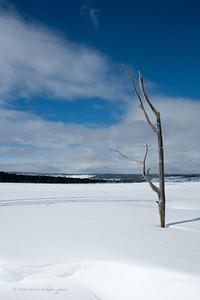 yellowstone winter 2011