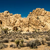 Joshua Tree National Park-