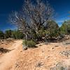Butler Wash trail - Utah-5965