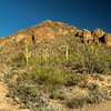 Saguaro National Park - Tucson Mountain District - Saguaro Cactus (1 of 1)