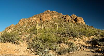 Saguaro National Park - Tucson Mountain District - Saguaro Cactus (1 of 1)