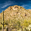 Saguaro National Park - Tucson Mountain District - Saguaro Cactus (4 of 5)
