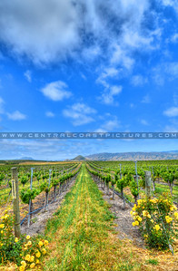 edna-valley-vineyard_7137