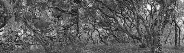 OAK FOREST #5