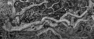 OAK FOREST #6