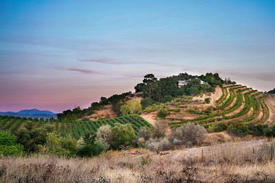 Alexander Valley Vineyard, Early Morning Light