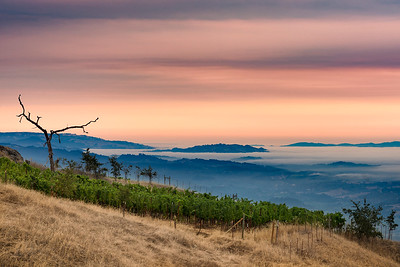 Alexander Valley, Early Morning Fog