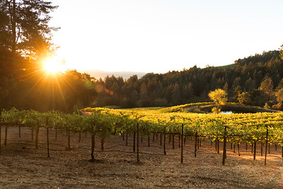 Spring Mountain Vineyard Sunrise