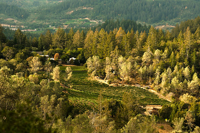 Napa Valley Hillside Vineyards