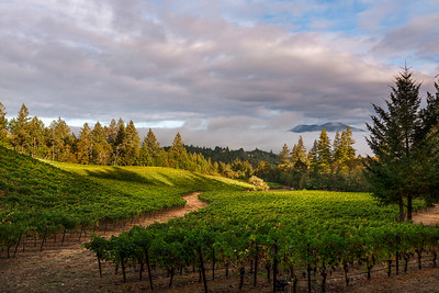 Diamond Mountain Vineyard, Sunrise