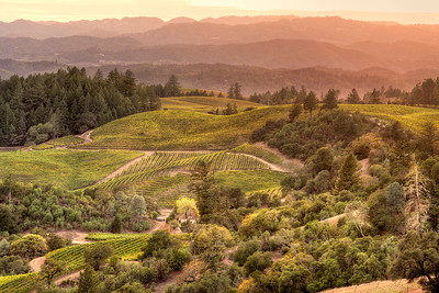 Alexander Valley, Hillside Vineyard Sunset