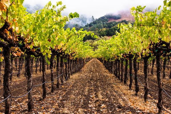 Knights Valley Vineyard, Fall