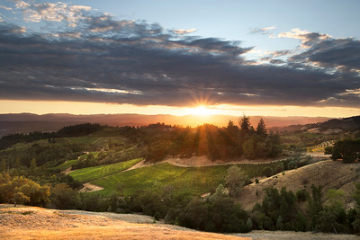 Sonoma County Vineyards, Sunset