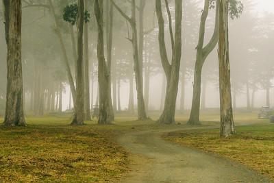 A foggy day @ Spring Ranch, Mendocino