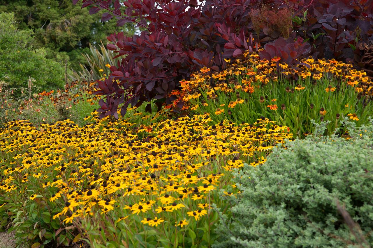 Botanical Garden - Fort Bragg