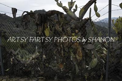 walking dead cactus