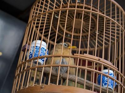 GAGES & BIRDS