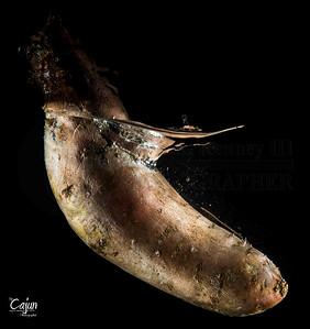 CAJUN'S FOOD PHOTOGRAPHY 2014