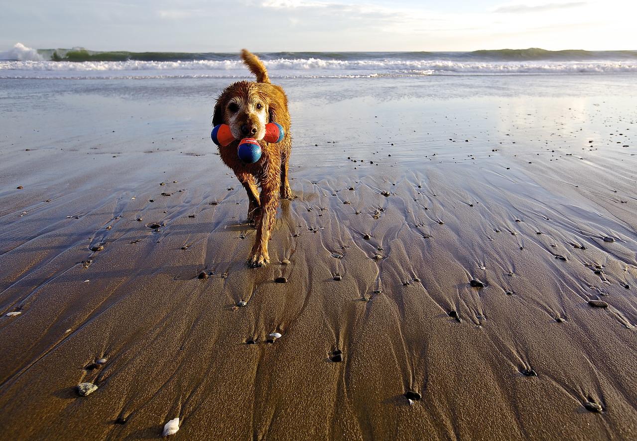 Dog With Toy, Santa Cruz