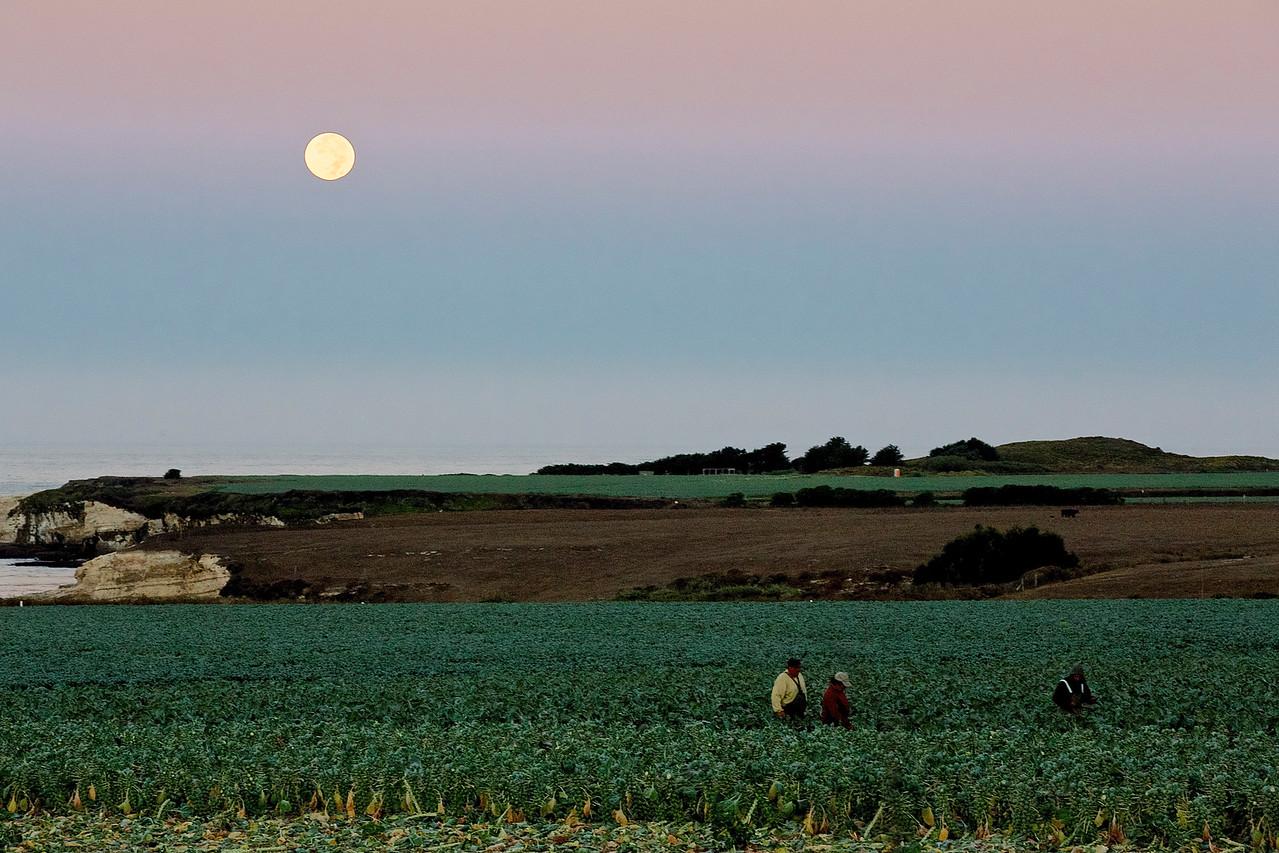 Setting Moon Over Fieldworkers.  Santa Cruz County