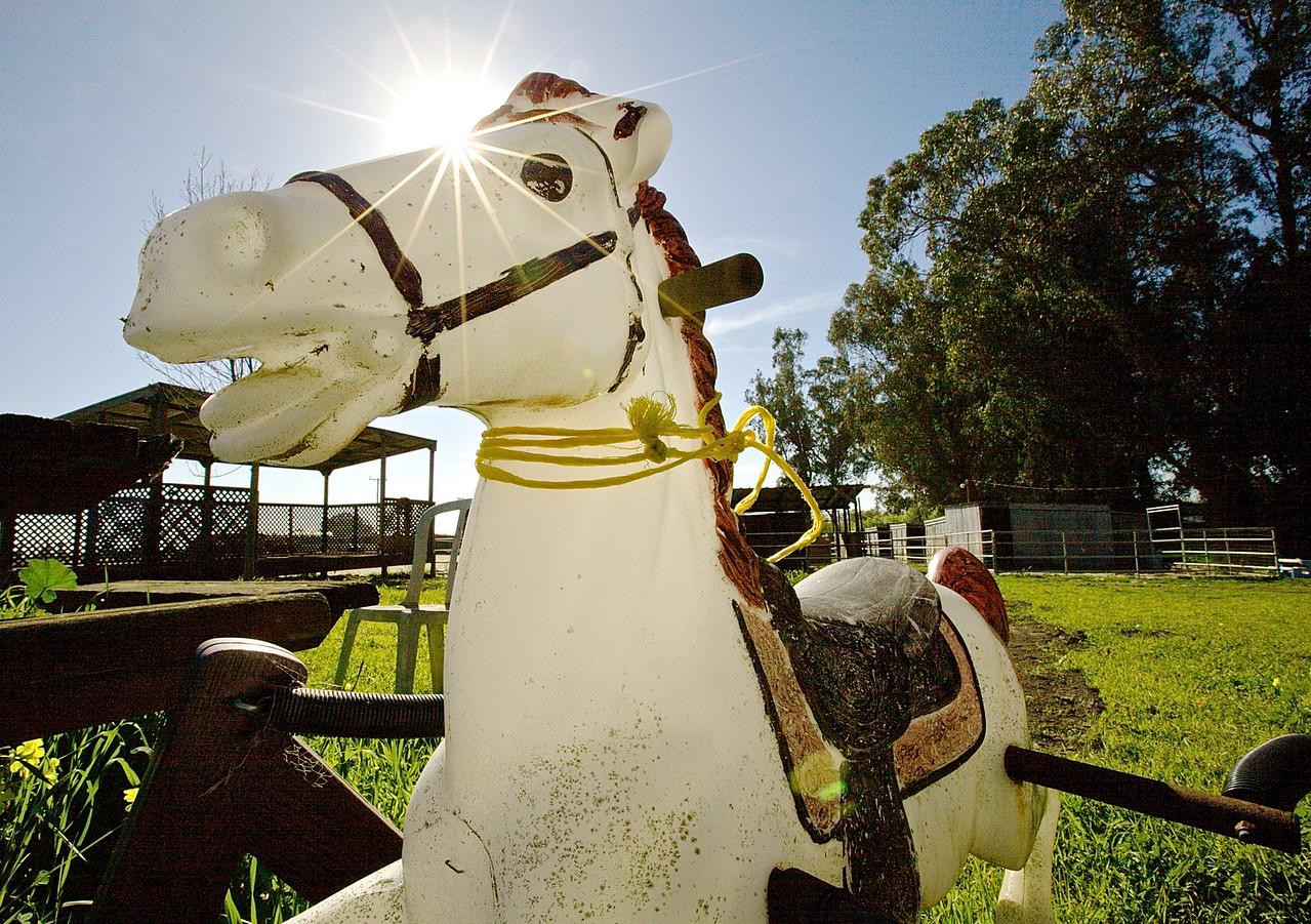 Hobby Horse.  Near Wilder State Park, Santa Cruz County.