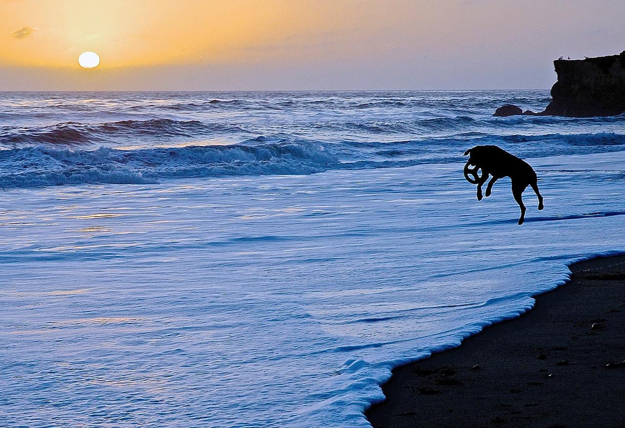 Driving Dog.  Santa Cruz Beach
