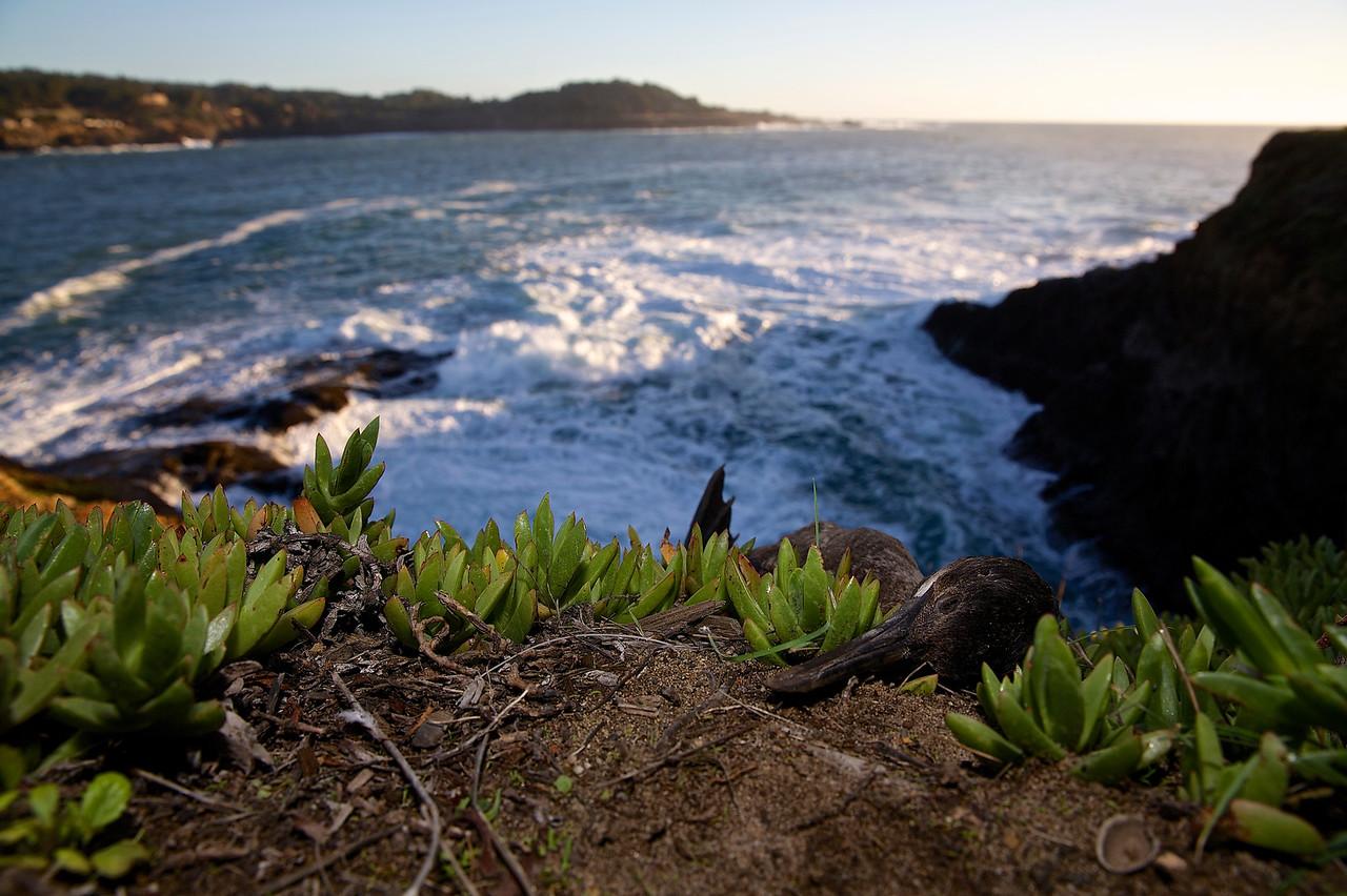 Rest In Peace.  Mendocino, California Coastline