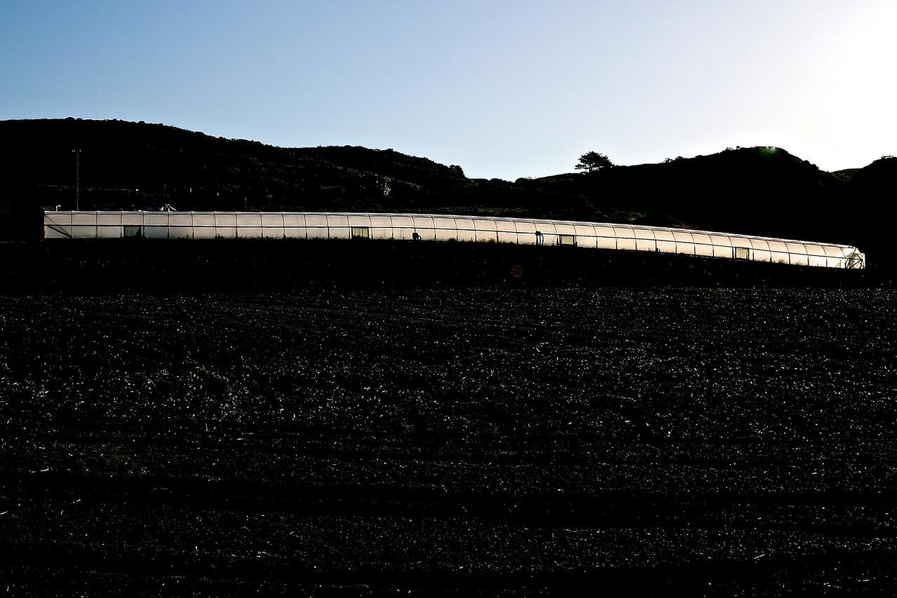 Greenhouse.  Santa Cruz County