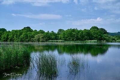 Burton Pond MSCC-1763 - 9-19 am